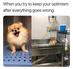 Trendy 18 Best Animal Memes Collection These funny animal memes are meant to brighten your day. Share these Animals Humor memes with your besties. Read This 18 Animals Humor memes: Cute Animal Memes, Animal Jokes, Cute Funny Animals, Funny Animal Pictures, Cute Baby Animals, Funny Cute, Baby Pictures, Funny Photos, Meme Pictures