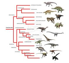 Meet the Armored Dinosaurs of the Mesozoic Era | Armors, We and ...
