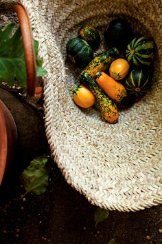 Basket of Zucchini @lemonfirebridgade.com