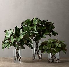 Faux Magnolia in Illusion Water Magnolia Centerpiece, Branch Centerpieces, Magnolia Branch, Magnolia Leaves, Magnolia Wedding, Glass Cylinder Vases, Country Christmas Decorations, Holiday Decor, Wall Art For Sale