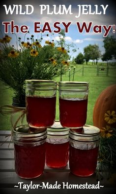 Wild Plum Jelly recipe - No peeling, no pitting, no PECTIN Check out this Lazy-Girl's wild plum jelly recipe. Wild Plum Jelly Recipe, Plum Jelly Recipes, Wild Plum Butter Recipe, Dried Plums, Homemade Jelly, Jam And Jelly, Vegetable Drinks, Vegetable Garden, Canning Recipes
