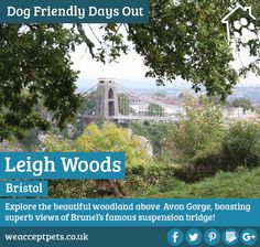 Dog Friendly Day Out: Leigh Woods, Bristol  Explore the beautiful woodland above Avon Gorge, boasting superb views of Brunel's famous suspension bridge!