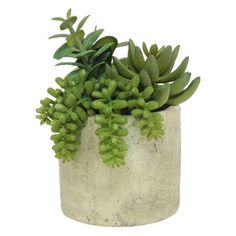 "Mixed Succulent Potted Table Arrangement; 7"" : Target"