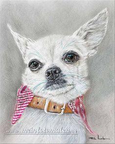Chihuahua Hundeportraits Tiermalerei Dog Portraits Pets Portrait Tierportraits