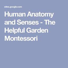 Human Anatomy and Senses - The Helpful Garden Montessori