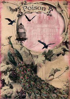 Laminas decoupage: laminas vintage Wendy P jaulas, sillas antiguas, lamparas...pajaros....