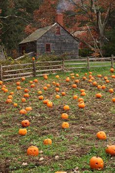 Ready for fall!   Mark Kimball Moulton Author/Photographer: