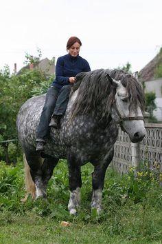 Polish Draft Horse - Dapple Gray - What a big beauty.