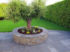 Raised Bed Gardening with grey sandstone wall, limestone wall capping, stunning specimen Olive tree and mixed (Rosemary, Hebe etc) compact ground covering plants.   The result is an eye catching focal point within the patio area as well as a useful seating area. www.owenchubblandscapers.com  Dublin, Ireland