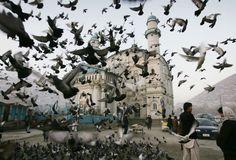 Pigeons fly outside Shah-e-Doshamshera's mosque in Kabul, Afghanistan, Dec. 24, 2012. (Photographer: Ahmad Nazar/Associated Press)