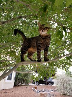 Fearless kitty!