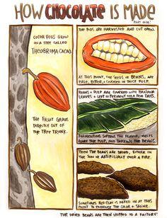 History of chocolate 3 essay