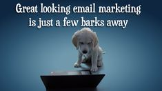 Our new #EmailMarketing video advertisement, featuring our talented office dogs: Monty, Baxter & Tully.   Who said never work with children or animals? (a 30 second ad, involved filming nearly 6 hours of raw footage and washing the green screen after one of the talent had a wee on it). Office Dog, Advertising, Ads, Working With Children, Email Marketing, Templates, Green, Animals, Design