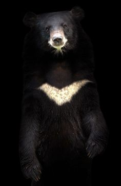 The official mascot for South Korea's 2018 Paralympics will be a moon bear. It may not sound like a big deal, but it is.