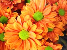 Was their favorite color orange? Hand out a single stem of orange daisies to each guest.