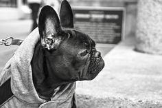 Wintermantel für den Hund – Ja, Nein, Vielleicht