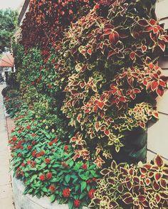 #flower #old #history #vsco #photo #phone 鲜花小吃店