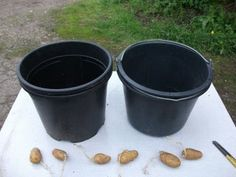 Growing Potatoes in Buckets : 4 Steps (with Pictures) - Instructables Potato Gardening, Bucket Gardening, Planting Potatoes, Gardening Tips, Organic Container Gardening, Organic Gardening Magazine, Container Gardening Vegetables, Vegetable Gardening, 1 Year Baby Food