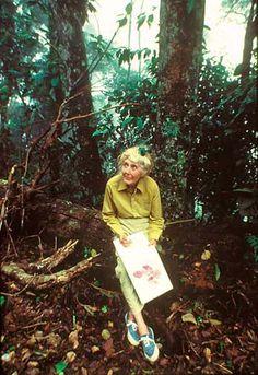 Margaret Mee, A DAMA DAS FLORES. Ilustração botânica.