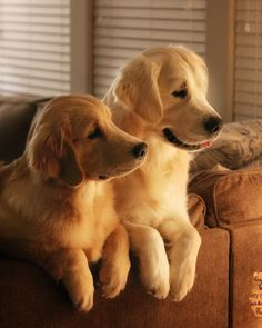 #TrendingNow on Pin feed are as usual are unconditional lovers ... #dogs!