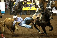 Dirk Tavenner holds onto the horns of a steer while leaping from his horse during the steer wrestling event at the ninth event of the 2014 San Angelo Stock Show and Rodeo.
