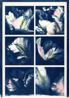 Hand-tinted Cyanotype prints.