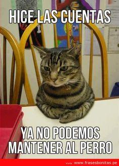 Inteligente el gatito... ¿No es así? www.facebook.com/somosQIN