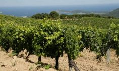 Corsica | Travel | The Guardian