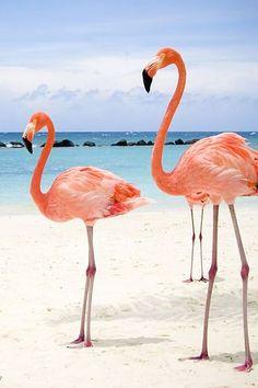 Beautiful Flamingos in Isla Holbox