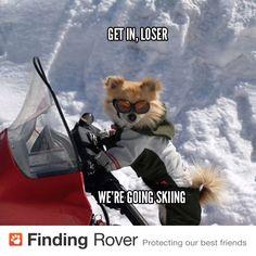 Get in, loser. We're going skiing.