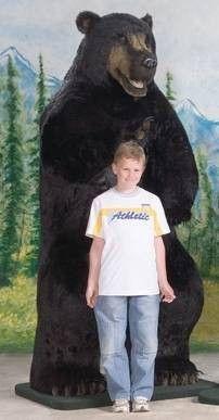 """""""Cal"""" Black Bear"""