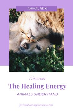 Learn an introduction to Animal Reiki and connect deeper with your pet, while helping them heal on all energetic levels. How To Start Meditating, Reiki Quotes, What Is Spirituality, Animal Reiki, Learn Reiki, Reiki Symbols, Reiki Meditation, Animal Quotes, Pet Quotes