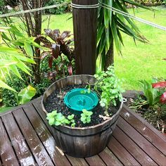 This stylish half wine barrel with a Go Eco Compost Bucket in the middle not only composts ALL your food scraps, it also feeds nutrients to your herbs 🌱 Herb Garden, Vegetable Garden, Compost Bucket, Eco Store, Organic Soil, Food Waste, Barrel, Seeds