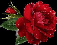 Imagens Lindas - Imagens lindas rosas
