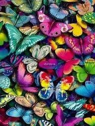 beautiful colourful butterflies