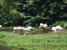Singapore Vacation, Vacation Trips, Island, Animals, Animales, Animaux, Islands, Animal, Animais