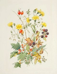 18th century botanical illustrations - Google Search