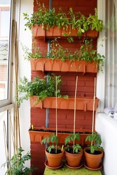 Yes! this is the idea for my balcony herb garden I needed! Never thought to use the wall. Duh.