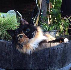まん丸の瞳を持つ盲目の猫。保護されると…