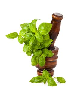 Basil offers an array of health-enhancing benefits such as protection against DNA damage and reduction of stress. #health #nutrition #basil