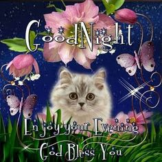 Good Night Kitty Blessing night good night good night blessings good night wishes beautiful good night quotes Good Night Sleep Well, Good Night Sister, Cute Good Night, Good Night Sweet Dreams, Good Morning Good Night, Morning Light, Good Morning Monday Images, Funny Good Night Quotes, Sweet Dreams Pictures
