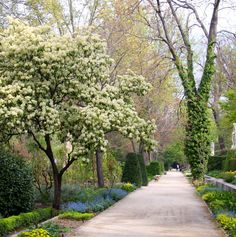 Primavera. Real Jardín Botanico de Madrid.  #jardinbotanico #Madrid