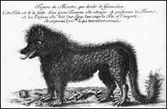 La bête refait trembler de Gévaudan- Une gravure 18e siècle de la bête du Gévaudan.
