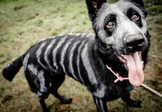 Artist Uses Organic NonToxic Paint to Turn Her Dog Into Sugar Skull Skeleton For Day Of The