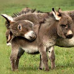 Donkeys ❤❤❤