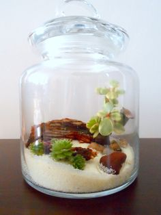 terrarium, fun with kids