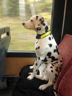 Riding the buss