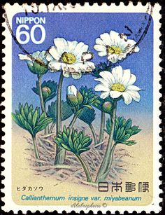 Japan. CALIANTHEMUM INSIGNE VAR. MIYABEANUM. Scott 1578 A1150, Issued 1985 July 31, Perf. 13, 60. /ldb. Japanese Stamp, Valley Of Flowers, Postage Stamp Collection, July 31, You Are The World, People Art, Fauna, Stamp Collecting, Mailbox
