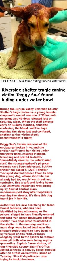http://www.examiner.com/article/riverside-shelter-tragic-canine-victim-peggy-sue-found-hiding-under-water-bowl