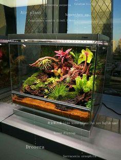 Frog Terrarium, Terrarium Reptile, Terrarium Plants, Bonsai Plants, Carnivorous Plants, Air Plants, Moss Garden, Succulents Garden, Water Garden